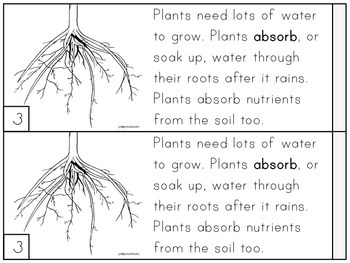 Plants Skinny Book