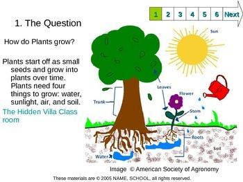 Plants Slam Dunk Lesson