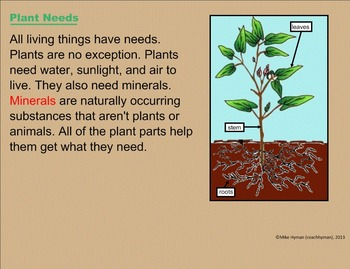 Plants - SmartBoard 3 in 1 Pack for Third Grade