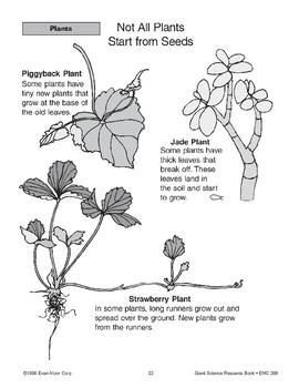 Plants: Spores, Cones, No Seeds