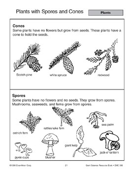 Plants: Spores, Cones, No Seeds