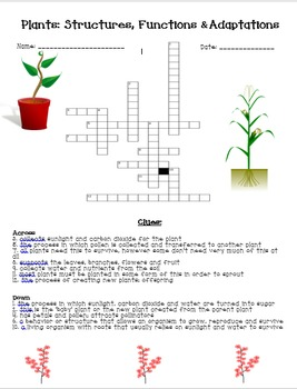 Plants: Structure, Function & Adaptations Crossword Puzzle *FREEBIE*