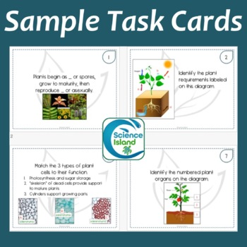 Plants: Structure and Function Task Cards with PowerPoint Review