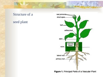 Plants - Structure of a Seed Plant