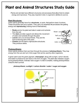 plants study guide and review worksheet sol 4 4 by alyssa teaches. Black Bedroom Furniture Sets. Home Design Ideas