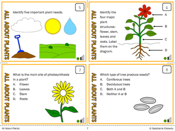 Plants Task Cards (Differentiated and Tiered)
