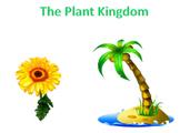 Plants - The Plant Kingdom