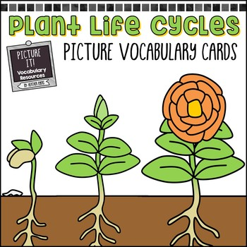 Plants & Their Life Cycles - Picture Vocabulary Cards