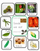 Plants Theme and Kindergarten Common Core