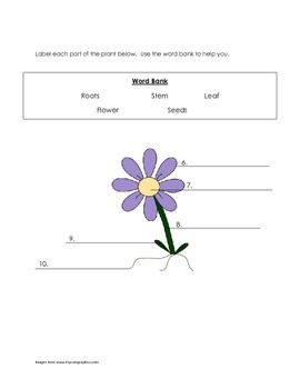 Plants Unit Assessment