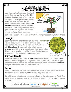 Plants Unit *Bundle* ~ Differentiated Plants Reading Passages & Word Wall