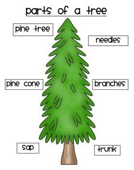Plants Unit - For use with the California Treasures Language Arts Program