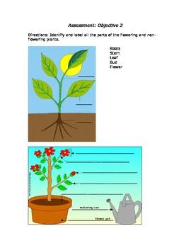 Plants Unit Plan