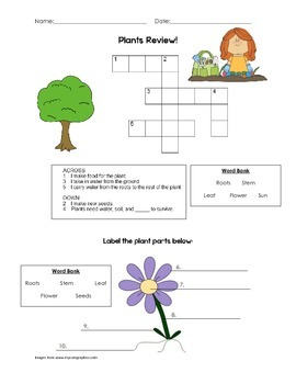 Plants Unit Review