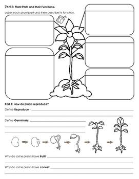 Plants Unit Study Guide