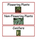 Plants Unit Word Wall Cards