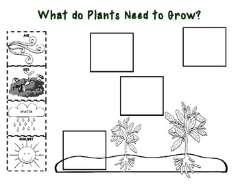 Plants Unit for Early Elementary - Life Cycle of Plants