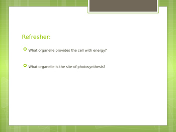 Plants VS Animals Energy Notes