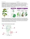 Plants - Vascular o No Vascular