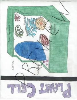 Plants-Visual Learning