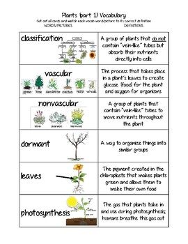 Plants Vocab