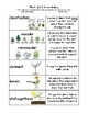 Plants Vocab Sort and Word Wall Cards