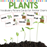 Plants Vocabulary Picture Cards for Anchor Charts