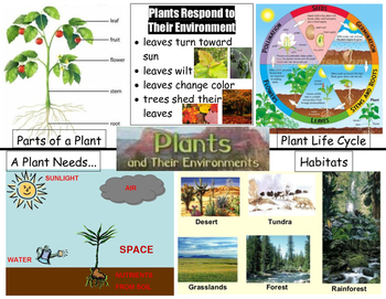 Plants Vocabulary Poster