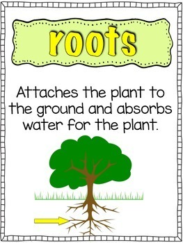 Plants: Vocabulary Posters & Activities