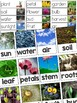 Plants Vocabulary Resources