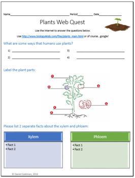 Plants Webquest Scavenger Hunt Science Common Core Activity 5-8