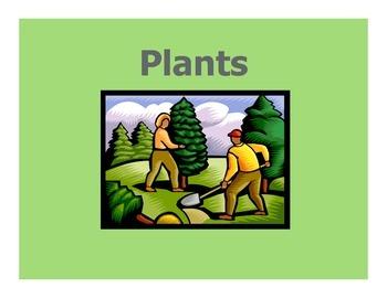 Plants Week 2:  Pumpkins
