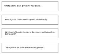 Plants Wh Questions
