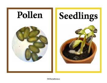 Plants Word Wall