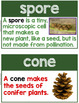 Plants Word Wall ~ Visual Support for 50 Plants Vocabulary Terms