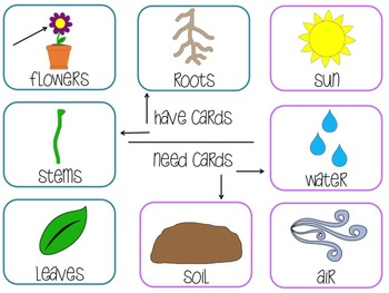 Plants--an interactive brace map and sort