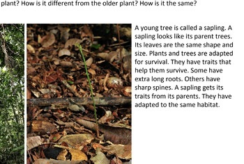Plants and Animals Have Traits PDF