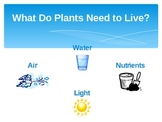 Plants and Animals Powerpoint
