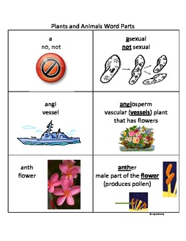 Plants and Animals Root Word Parts