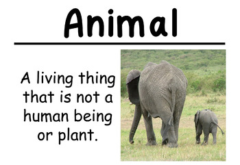Plants and Animals Science Vocabulary Cards (Large)