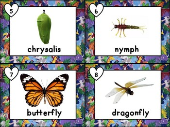 Plants and Animals Science Vocabulary Write the Room for Combined Grades