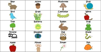 Food chain activities- sorts and tasks 5.L.2.2