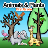 Plants and Animals Structure and Survival: A First Grade NGSS Science Unit