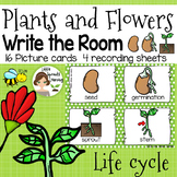 Plants and Flowers Write the Room (Life Cycle)