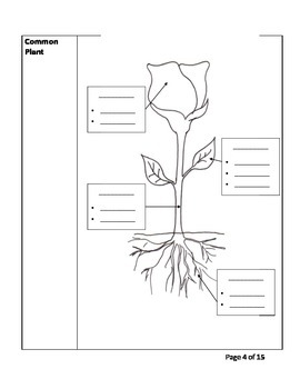 Plants and Life Processes Cornell Notes