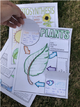 Plants and Photosynthesis all-in-one Foldable