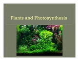 Plants and Photosynthesis by Zie