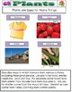 Plants  and Plant Life PDF FILE 94 Pages