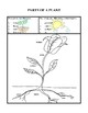 Plants and Seeds - Activities and Worksheets