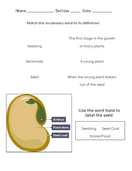 Plants and Seeds Test